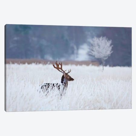 Fallow Deer In The Frozen Winter Landscape Canvas Print #OXM4994} by Allan Wallberg Canvas Art Print