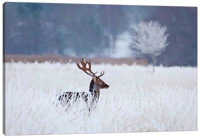 Fallow Deer In The Frozen Winter Landscape Canvas Art Print