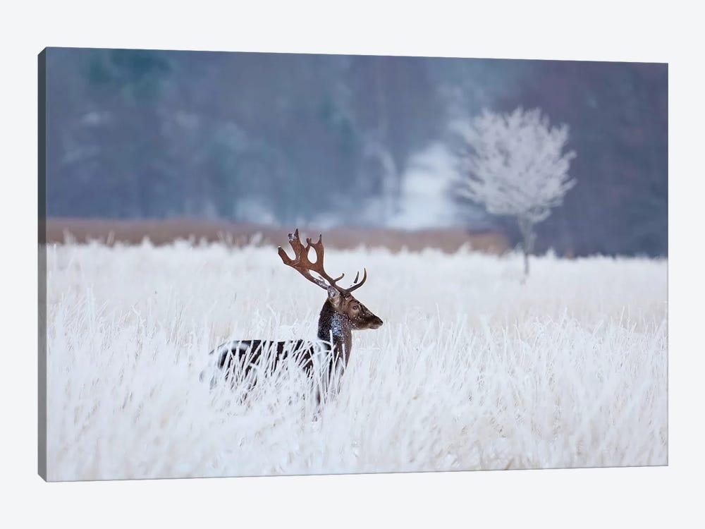 Fallow Deer In The Frozen Winter Landscape by Allan Wallberg 1-piece Canvas Wall Art