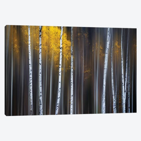Curtain Of Fall 3-Piece Canvas #OXM5002} by Andy Hu Canvas Art Print