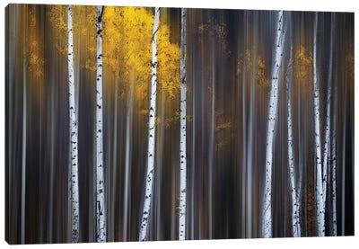 Curtain Of Fall Canvas Art Print