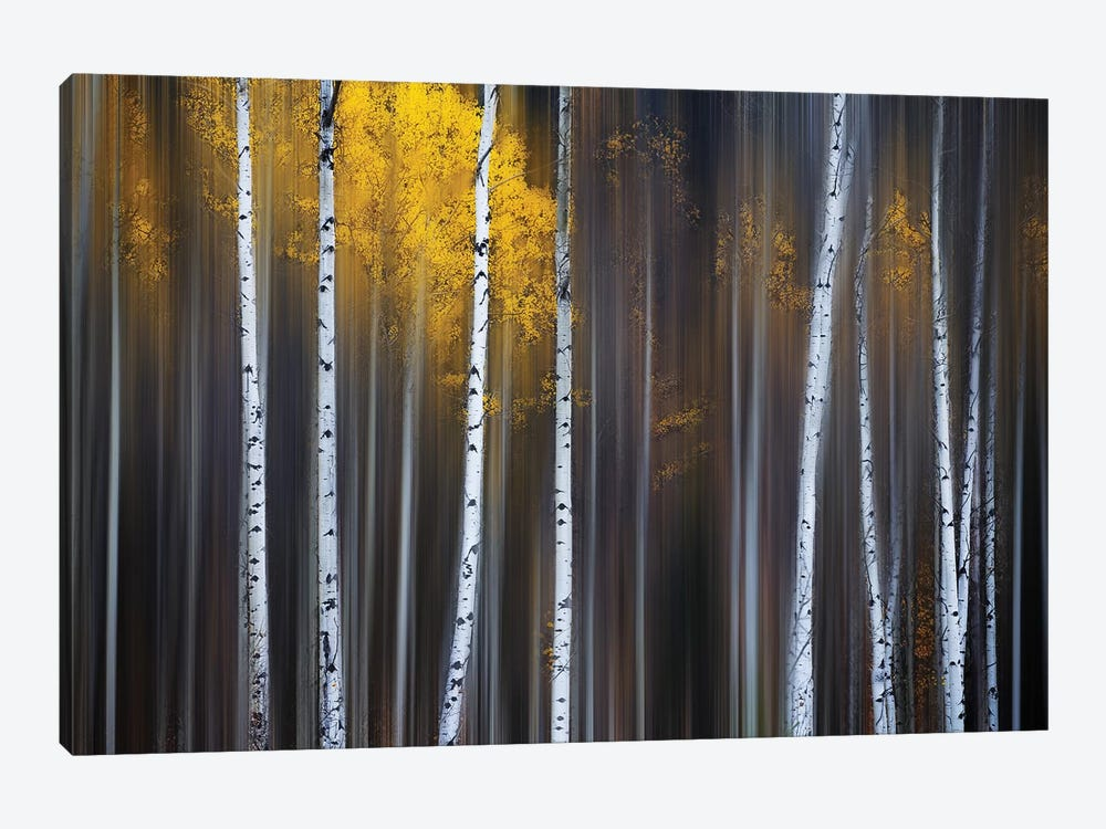 Curtain Of Fall by Andy Hu 1-piece Canvas Art Print