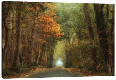 Country Road Canvas Art Print