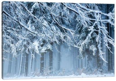 Snowworld Canvas Art Print