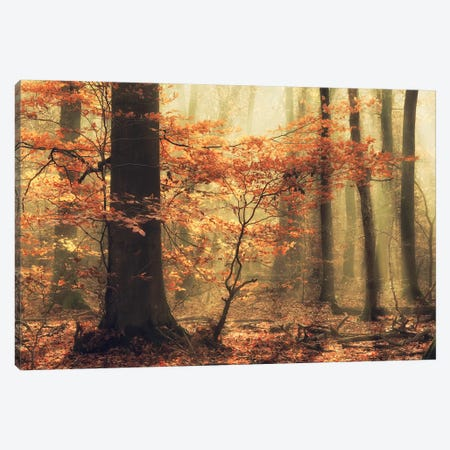 Soft Fall Canvas Print #OXM5008} by Anton van Dongen Canvas Art Print