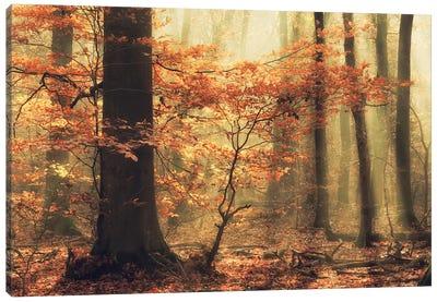 Soft Fall Canvas Art Print