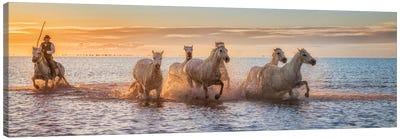 Camargue Horses Ii Canvas Art Print