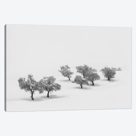 White Carpet Canvas Print #OXM5012} by Antonio Carrillo Lopez Canvas Artwork