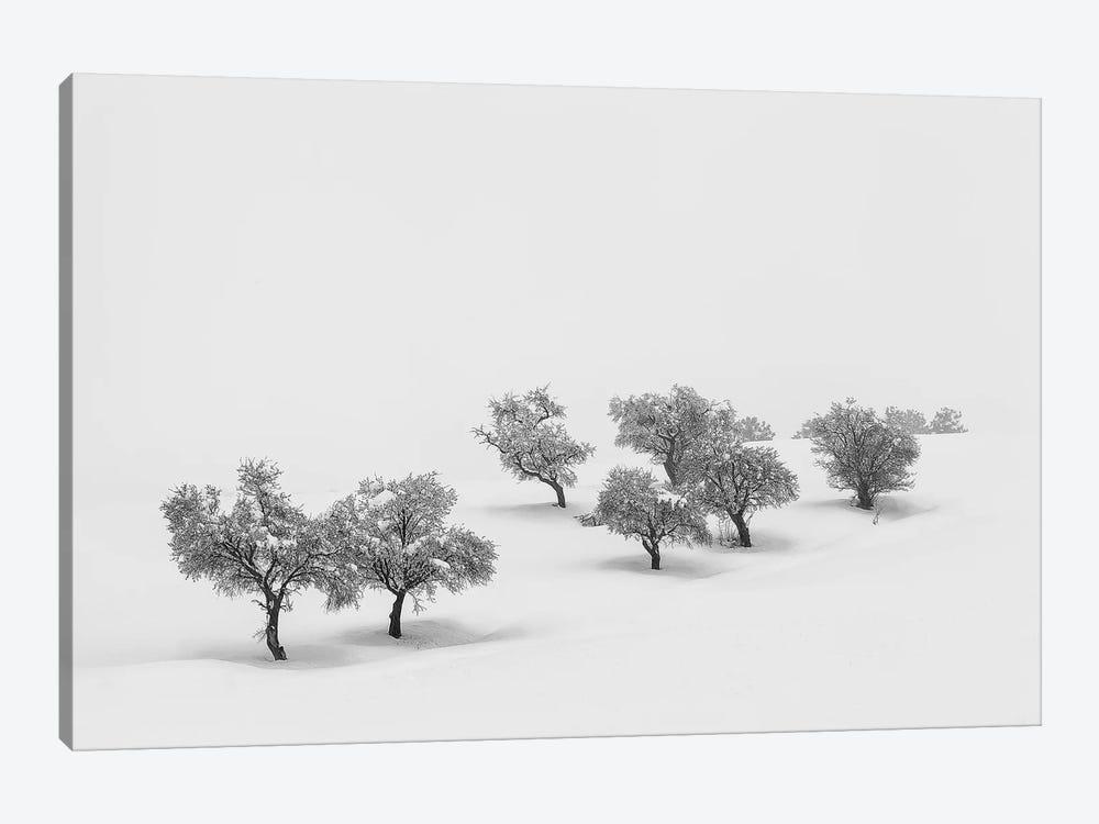 White Carpet by Antonio Carrillo Lopez 1-piece Canvas Art