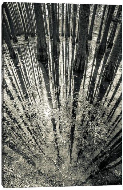 Synchronicity Canvas Art Print