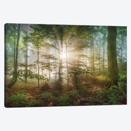 Morning Sun Canvas Print #OXM5040} by Burger Jochen Canvas Art Print