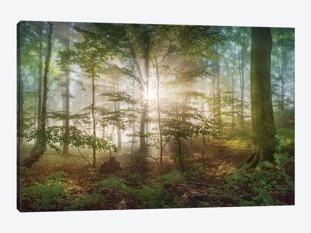 Morning Sun by Burger Jochen 1-piece Art Print