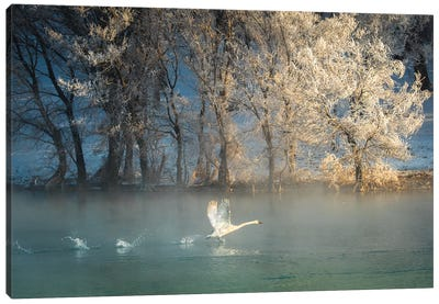Spirit Of A Swan Canvas Art Print