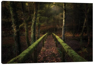 The Way To The Forest Canvas Art Print