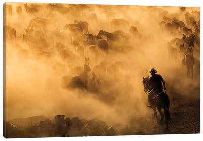 Cappadocia Wild Horses Canvas Art Print