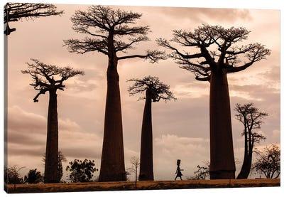 Madagascar Canvas Art Print