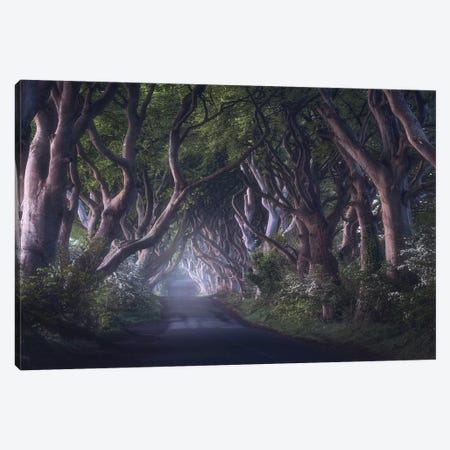 The Dark Hedges Canvas Print #OXM5073} by Daniel Gastager Canvas Art