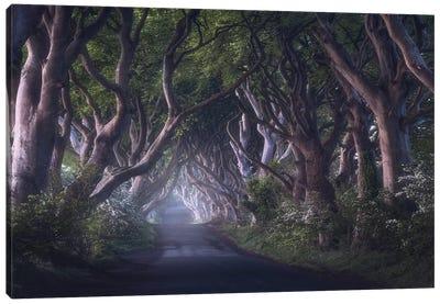 The Dark Hedges Canvas Art Print