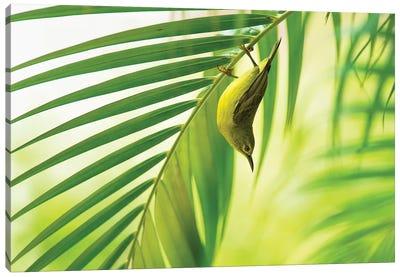 50 Shades Of Green Canvas Art Print