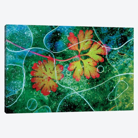 Thaw Canvas Print #OXM507} by Andres Miguel Dominguez Canvas Art