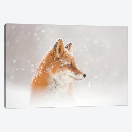 Snow Is Fallinga¦ Canvas Print #OXM5092} by Denis Budkov Canvas Wall Art