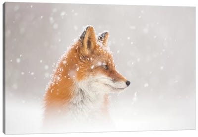 Snow Is Fallinga¦ Canvas Art Print