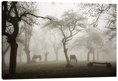 Horses In A Foggy Orchard Canvas Art Print