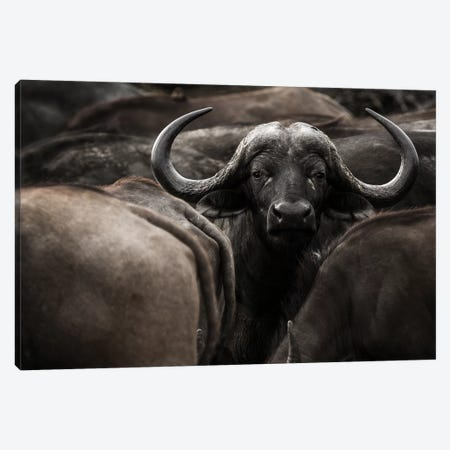 Eye Contact Canvas Print #OXM5094} by Denise Eriksson Art Print
