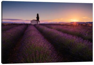 Provence Lavender Canvas Art Print