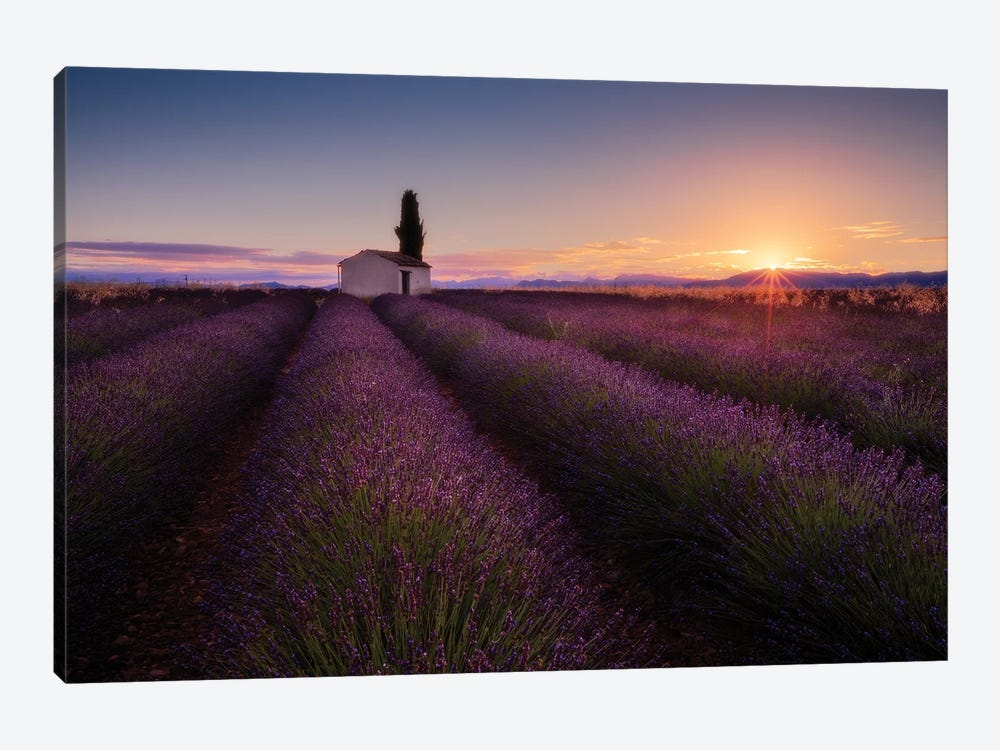 Provence Lavender by Donald Luo 1-piece Canvas Wall Art