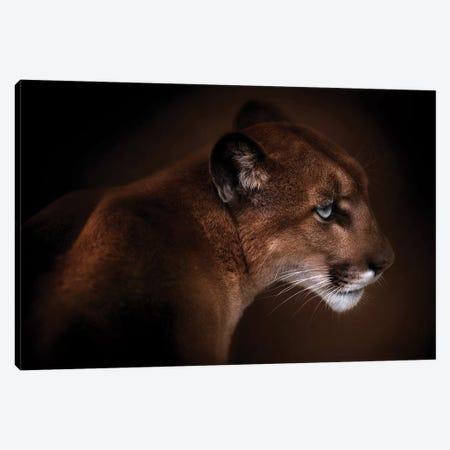 Puma Canvas Print #OXM5099} by Doris Reindl Canvas Artwork