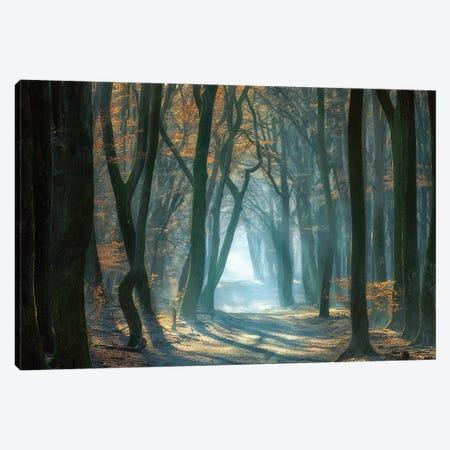 Cold Light Canvas Print #OXM5105} by Ellen Borggreve Art Print