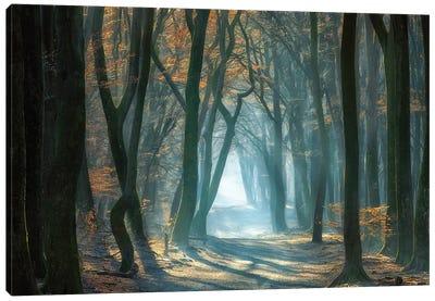 Cold Light Canvas Art Print