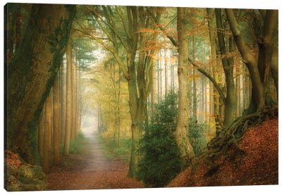 Following Fog Canvas Art Print