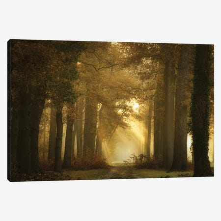Forever Forest Canvas Print #OXM5108} by Ellen Borggreve Canvas Wall Art