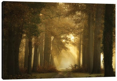 Forever Forest Canvas Art Print