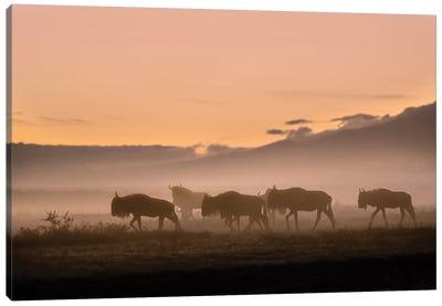 Early Morning In Serengeti Canvas Art Print