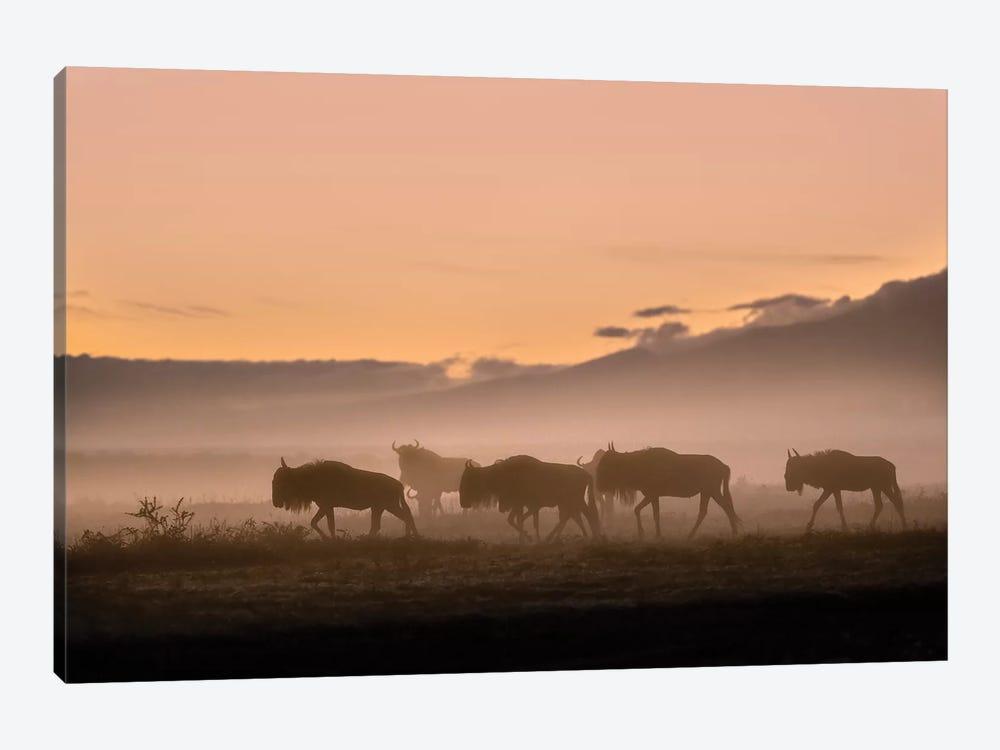 Early Morning In Serengeti by Fabrizio Moglia 1-piece Canvas Art Print