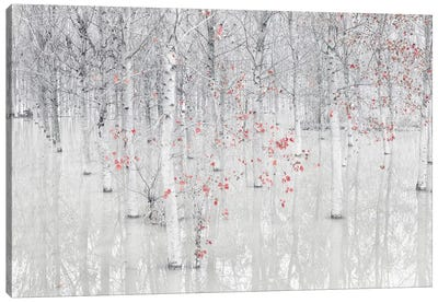 Red & White Canvas Art Print