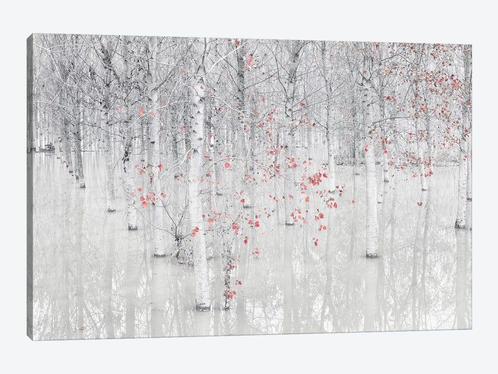 Red & White by Fiorenzo Carozzi 1-piece Canvas Wall Art