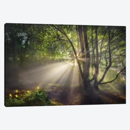 The Morning Light Canvas Print #OXM5130} by Fran Osuna Canvas Print