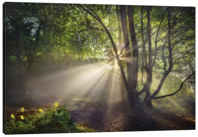 The Morning Light Canvas Art Print