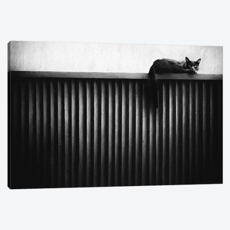 Fence Cat Canvas Print #OXM5134} by Gary E. Karcz Canvas Artwork
