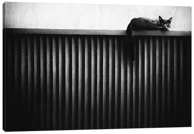 Fence Cat Canvas Art Print