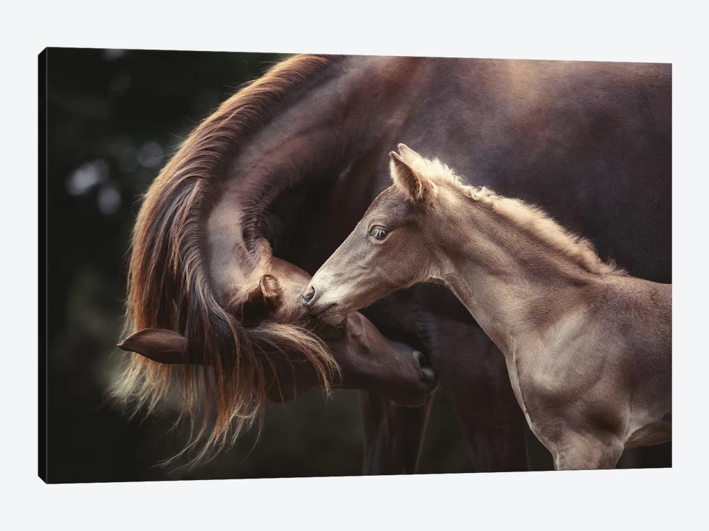 The Bond by Heike Willers 1-piece Canvas Wall Art
