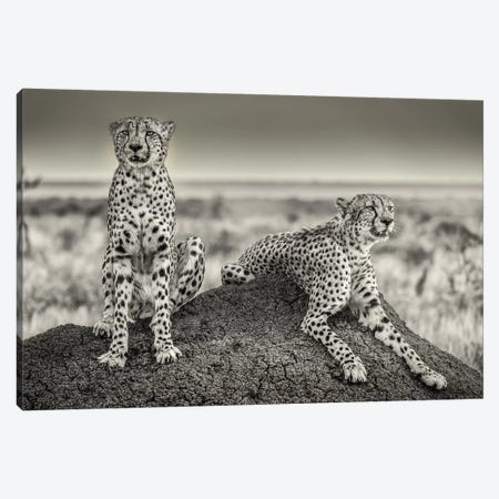 Two Cheetahs Watching Out Canvas Print #OXM5154} by Henrike Scheid Canvas Art
