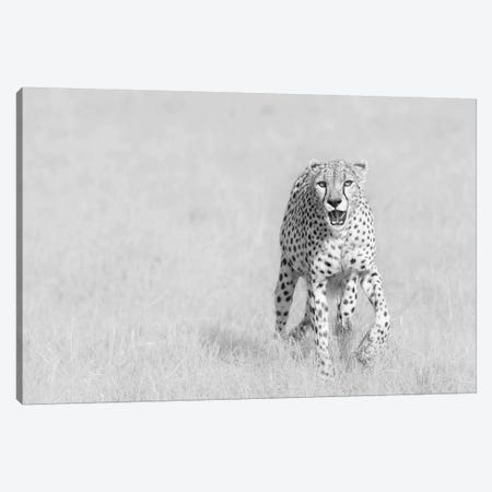 Cheetah Canvas Print #OXM5156} by Henry Zhao Canvas Art