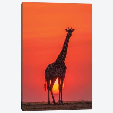 Sunset Giraffe Canvas Print #OXM5158} by Henry Zhao Art Print