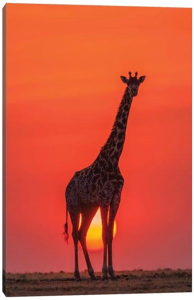 Sunset Giraffe Canvas Art Print