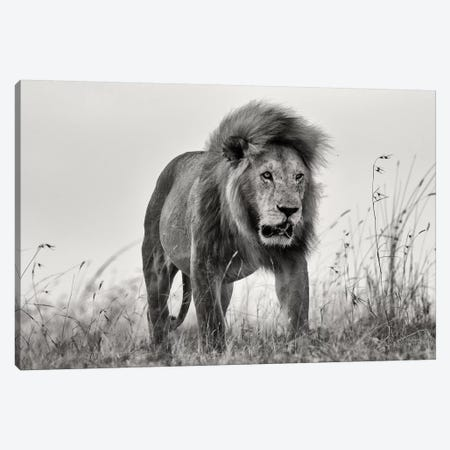 The King Canvas Print #OXM5159} by Henry Zhao Canvas Art Print